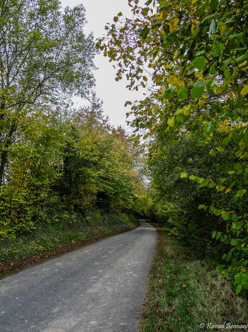 Autumn in the Picardie. trees, light, sky, france, green, nature, clouds, landscape, picardie. buy photo