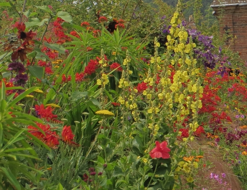 Celebrating Colour. flowers, beautiful, contrast, colourful, reds, nationaltrust, warwickshire, borders, packwoodhouse. buy photo