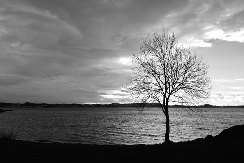 a view of a lake with a mountain in the background. blackandwhite, bw, tree, blancoynegro, árbol, fjord, fiordo. buy photo