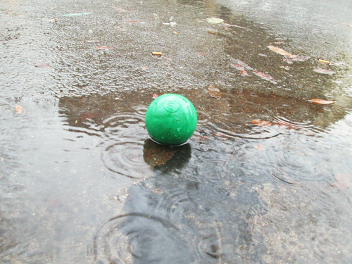 Ball drops. street, nyc, green, leaves, rain, brooklyn, ball, puddle, pavement, canonpowershot, rainydays, 2014, a3400. buy photo