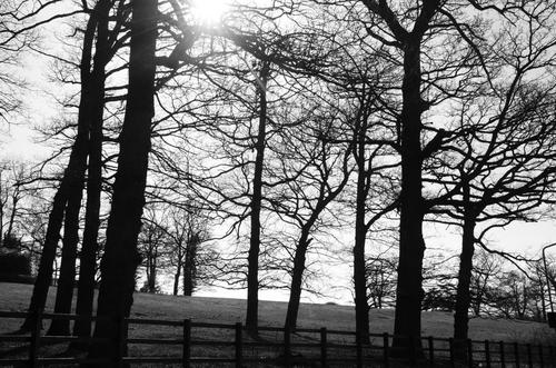 Trees, Lawrence Street, Mill Hill, London NW7, 18th Feb 2015. trees, london, monochrome, moody, millhill, wintersun, northlondon. buy photo