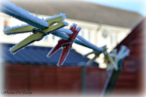 FROZEN PEGS. ilobsterit. buy photo