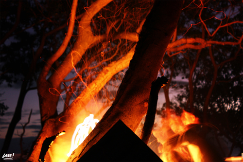 Fire painting. camping, tree, beach, night, fire, triangle, campfire, warren, nouvellecalédonie, newcaledonia, chaud, feu, illuminati, campement, chaleur, mazoyer. buy photo