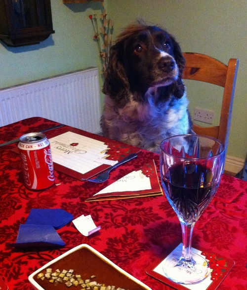 Hurry up & serve the pâté. christmas, dog, pet, fun, englishspringerspaniel, iphone4, ilobsterit. buy photo