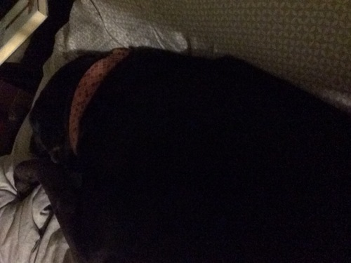 a black dog laying on a bed. buy photo