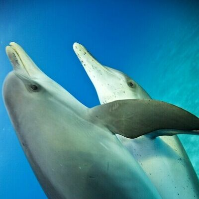 Holiday #Dolphin cuddle for everyone. Getting ready for New Year. #wildquest @atmoji. square, squareformat, iphoneography. buy photo