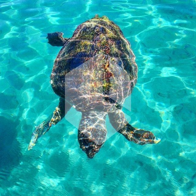 caretta singles & personals Thirteen caretta carettas died and some others are still under treatment, said professor yakup kaska, the head of the caretta caretta research, recovery and rehabilitation center (dekamer) kaska added that their birth rate success last year was 76 percent.