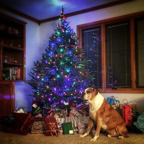 It's Beginning to Look a Lot Like Christmas. square, squareformat, iphoneography. buy photo
