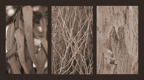Study in brown. tree, leaf, bark, twigs, odc, filltheframe, naturethroughthelens. buy photo