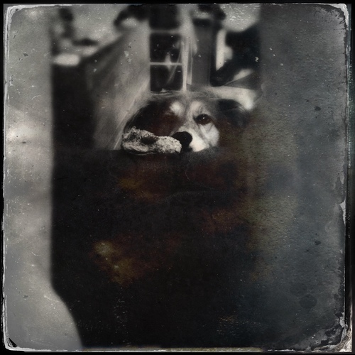 """Look, I brought my duckie over to you, put it on the foot rest, and got tired enough of waiting for you that I have to rest my head. This is why I jump onto you. You don't listen, silly boy person."". utata, tintype, augie, hipstamatic, hipstaworldphotoday. buy photo"