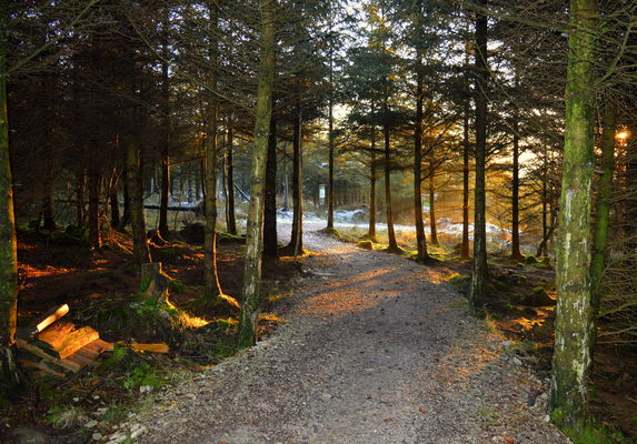 Into the forest. county, wood, uk, trees, england, sun, beauty, forest, nice, stream, tour, shadows, open, place, path, country, north, visit, location, walkway, area, sunlit, passage, northern, update, glimmer, shaft, attraction, glint, gisburn, ©2014tonyworrall, welovethenorth. buy photo