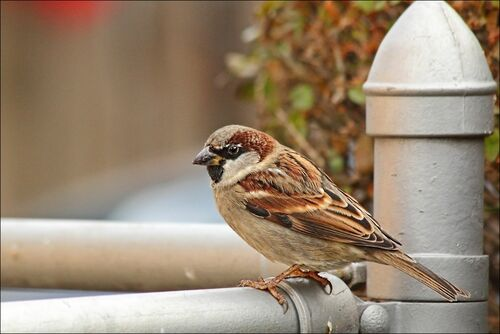 No Sun...So, So Shots Without. light, sun, canon, no, low, sparrows, 60d, challengeclubwinner, testingmyeditingskillsugh. buy photo